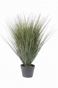 Bourne Faux Onion Grass
