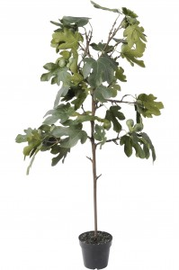 Bourne Faux Fig Tree 142 cm
